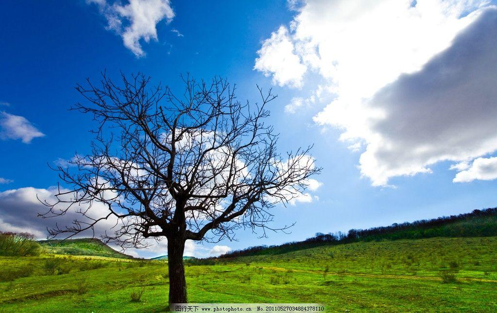 蓝天 白云 树木图片,自然风光 草地 绿草 小草 绿叶
