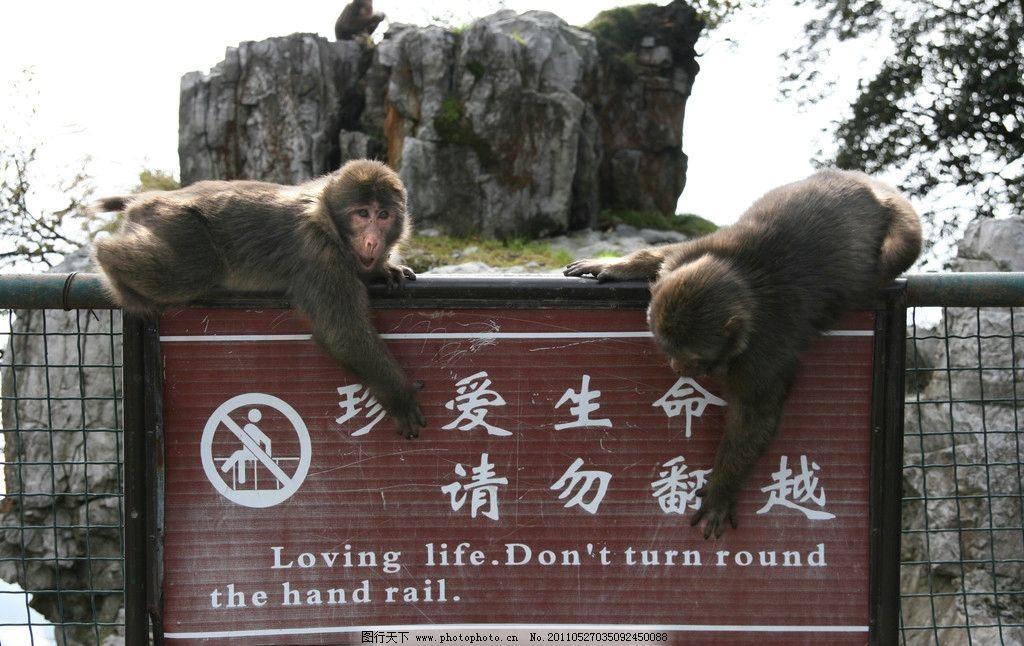 路牌 猴子 峨眉 安全 生命 野生动物 生物世界 摄影 72dpi jpg