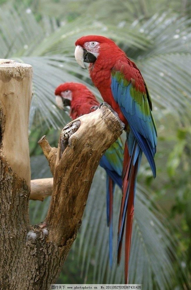 鹦鹉 动物 动物世界 摄影