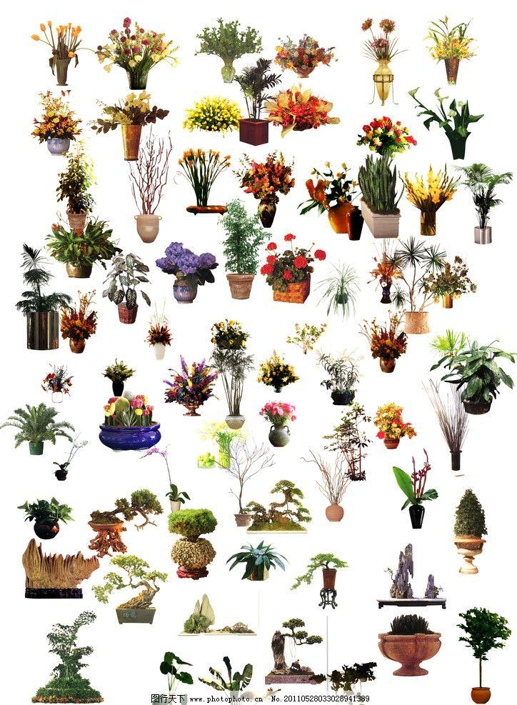 植物花卉素材 花 室内后期贴图