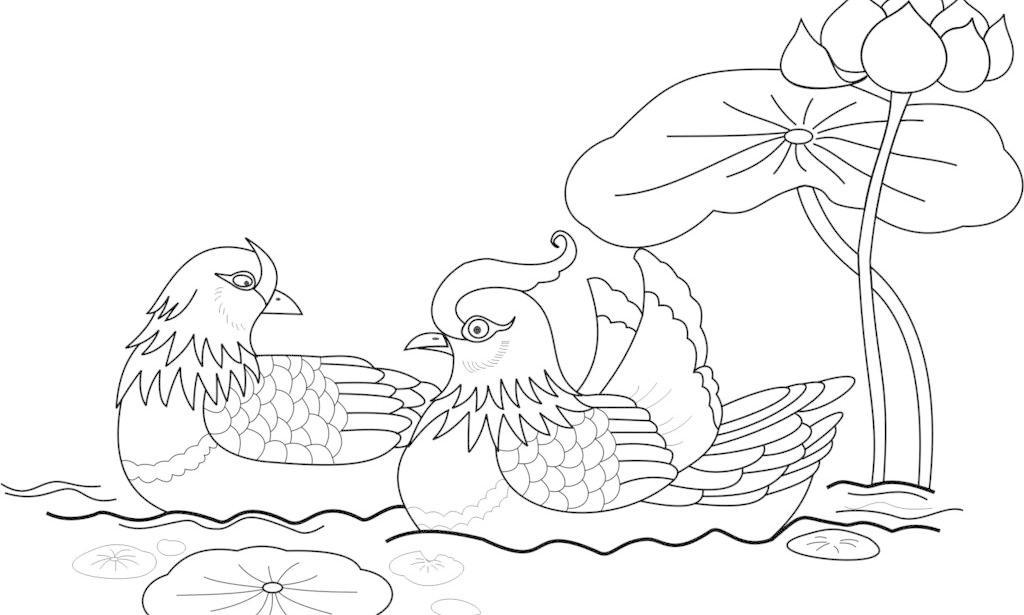 鸳鸯戏水图片