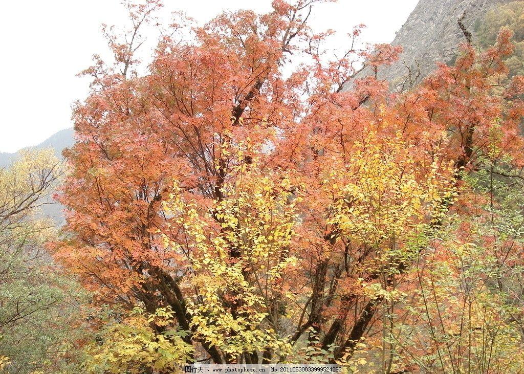 秋景 树木 树叶 大山 树林 山峰 甘孜美景 国内旅游 旅游摄影 摄影 72