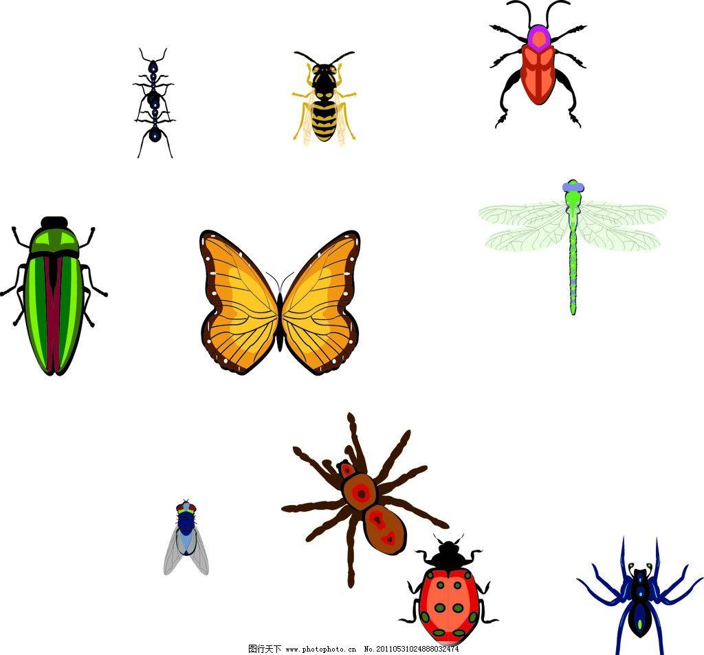 模式昆虫结构图