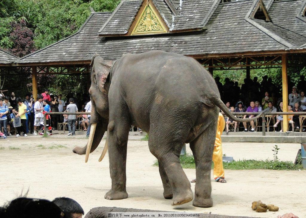 大象 西双版纳大象 动物园 野生动物 生物世界 摄影