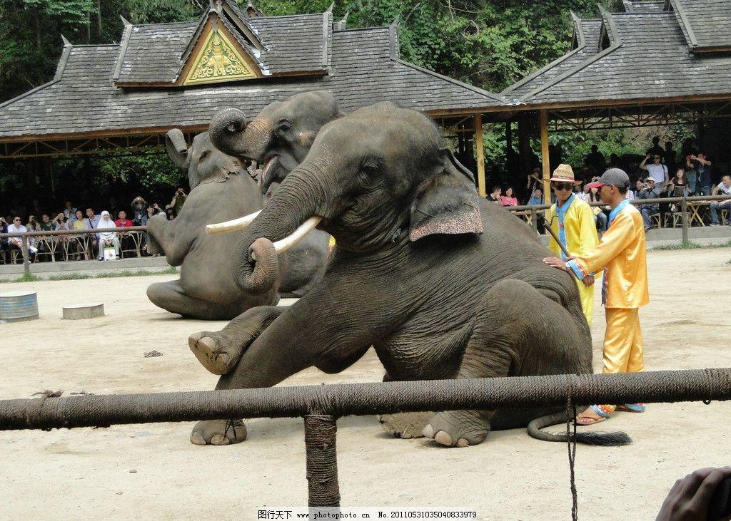 大象 西双版纳大象 动物园 大象表演 动物表演 野生动物 生物世界