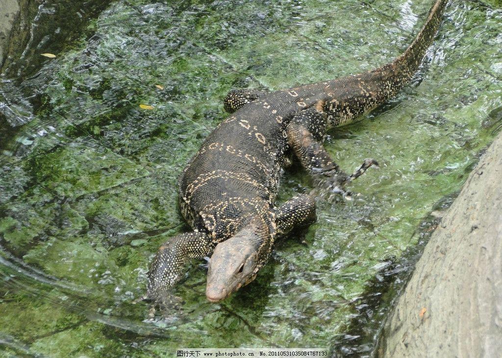 蜥蜴 西双版纳 动物园 动物表演 爬行动物 野生动物 生物世界 摄影