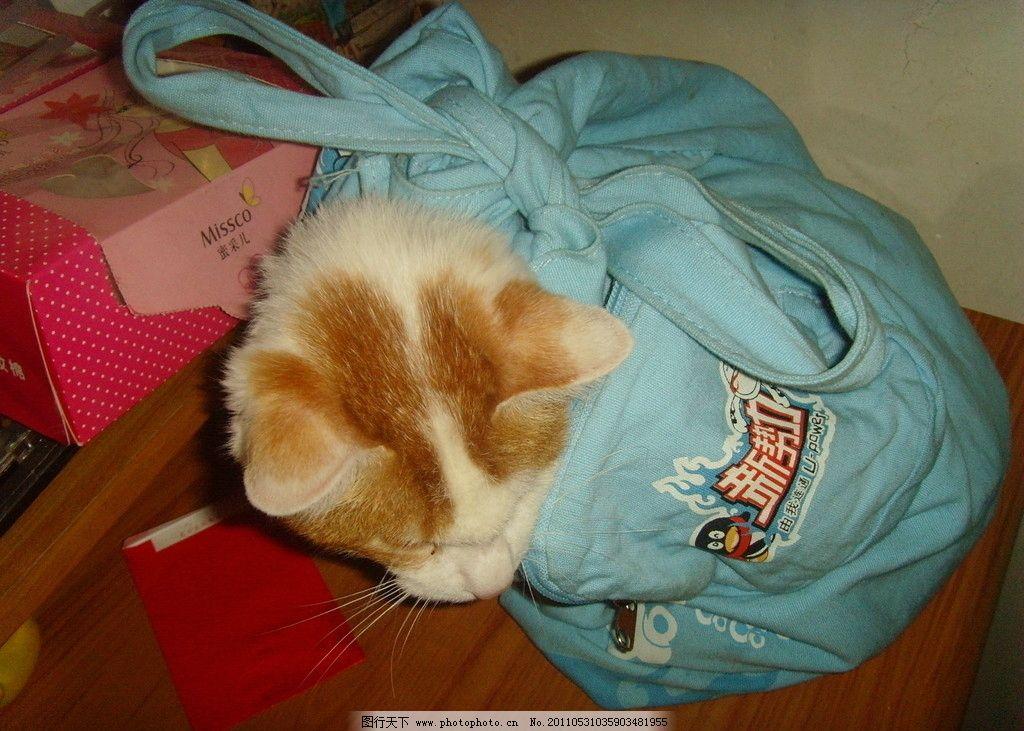 猫猫 小猫 家猫 可爱猫猫 捣蛋猫 宠物猫 包裹的猫 得意猫猫 家禽家畜