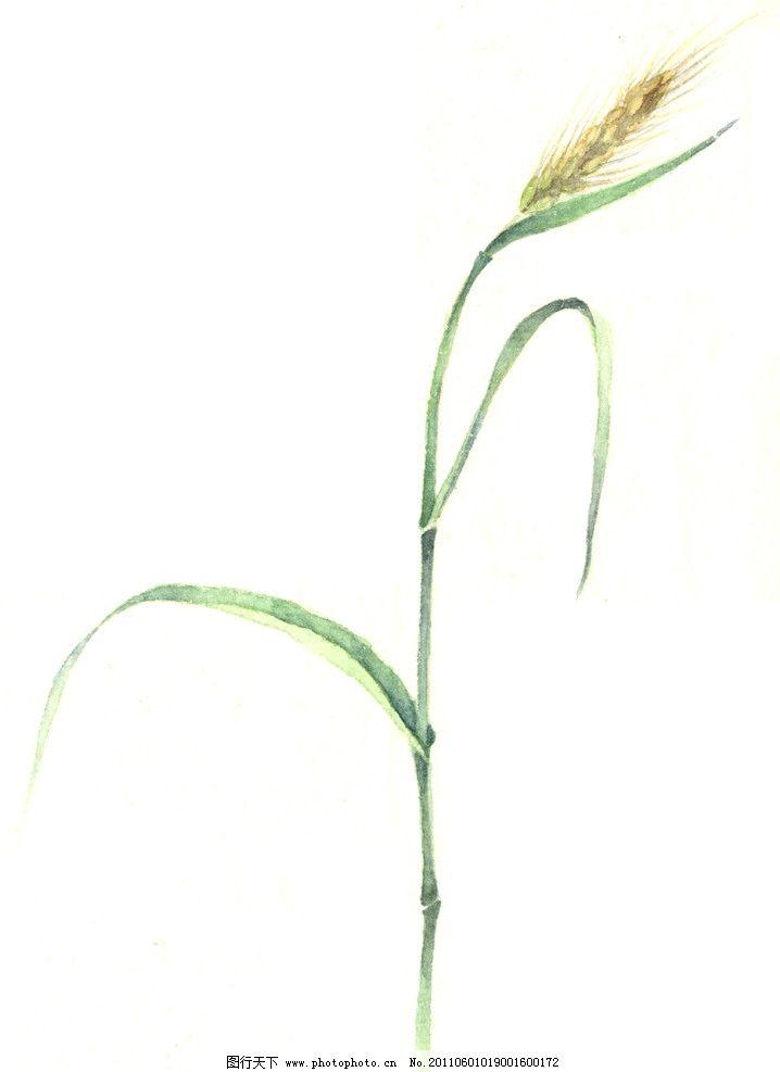 小麦版画 小麦 麦穗 绿色 小麦叶子 绘画书法 文化艺术 设计 300dpi