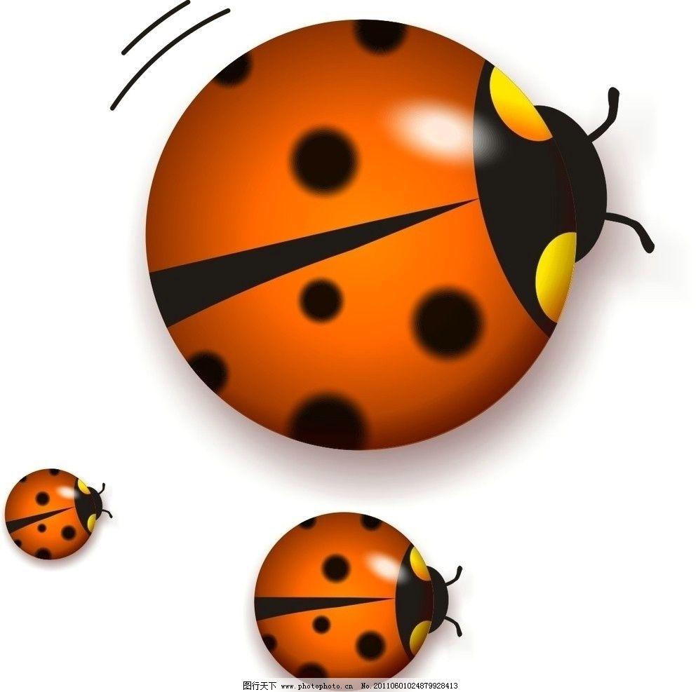 七星瓢虫 投影 白色背景 矢量图 三个七星瓢虫 圆圈