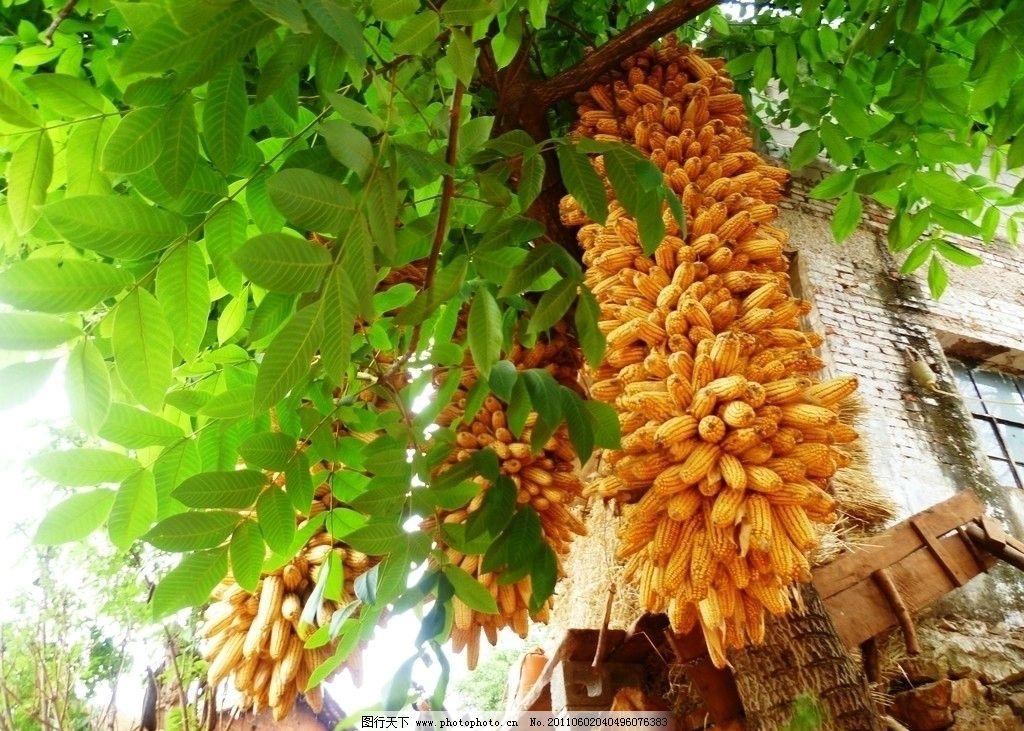 东北农庄种啥风景树