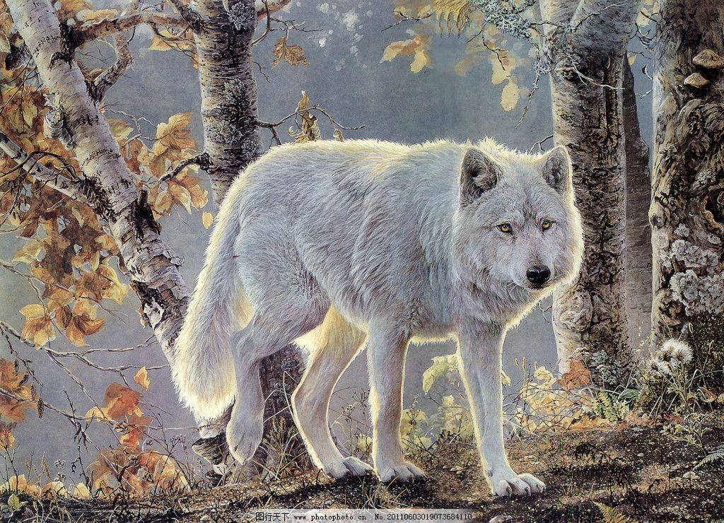 秋天的白狼 丙烯画 狼 白狼 动物 树 森林 绘画书法 文化艺术 设计