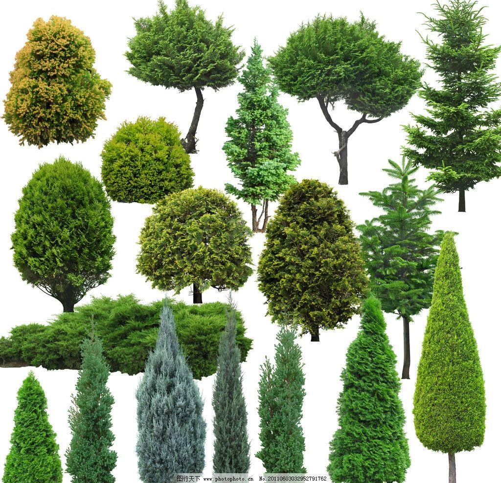 树 松树 大树 园林树木绿树图片_背景素材_psd分层_图