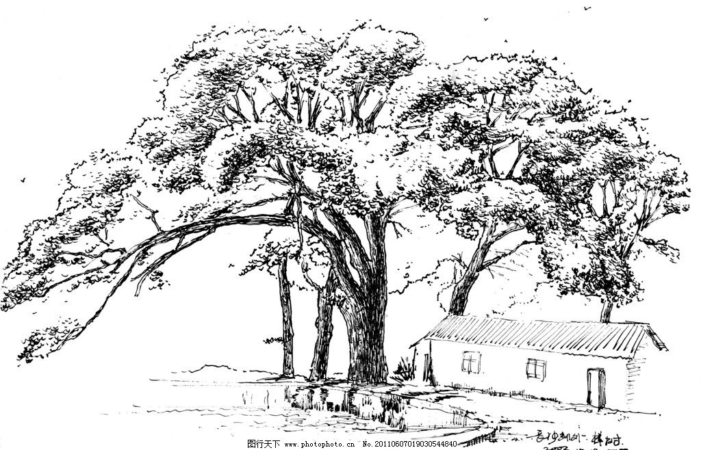 乡村大树手绘速写黑白画图片