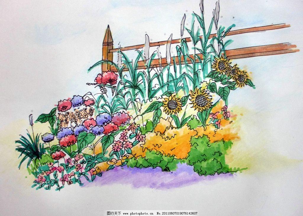 手绘风景 栅栏 向日葵 须刨石竹 狼尾草 万寿菊