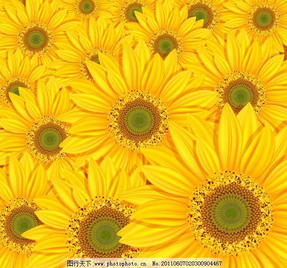 向日葵花纹背景图片