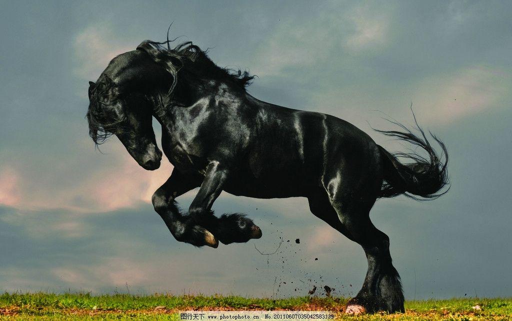 草原草地上奔跑的骏马图片_野生动物_生物世界_图行