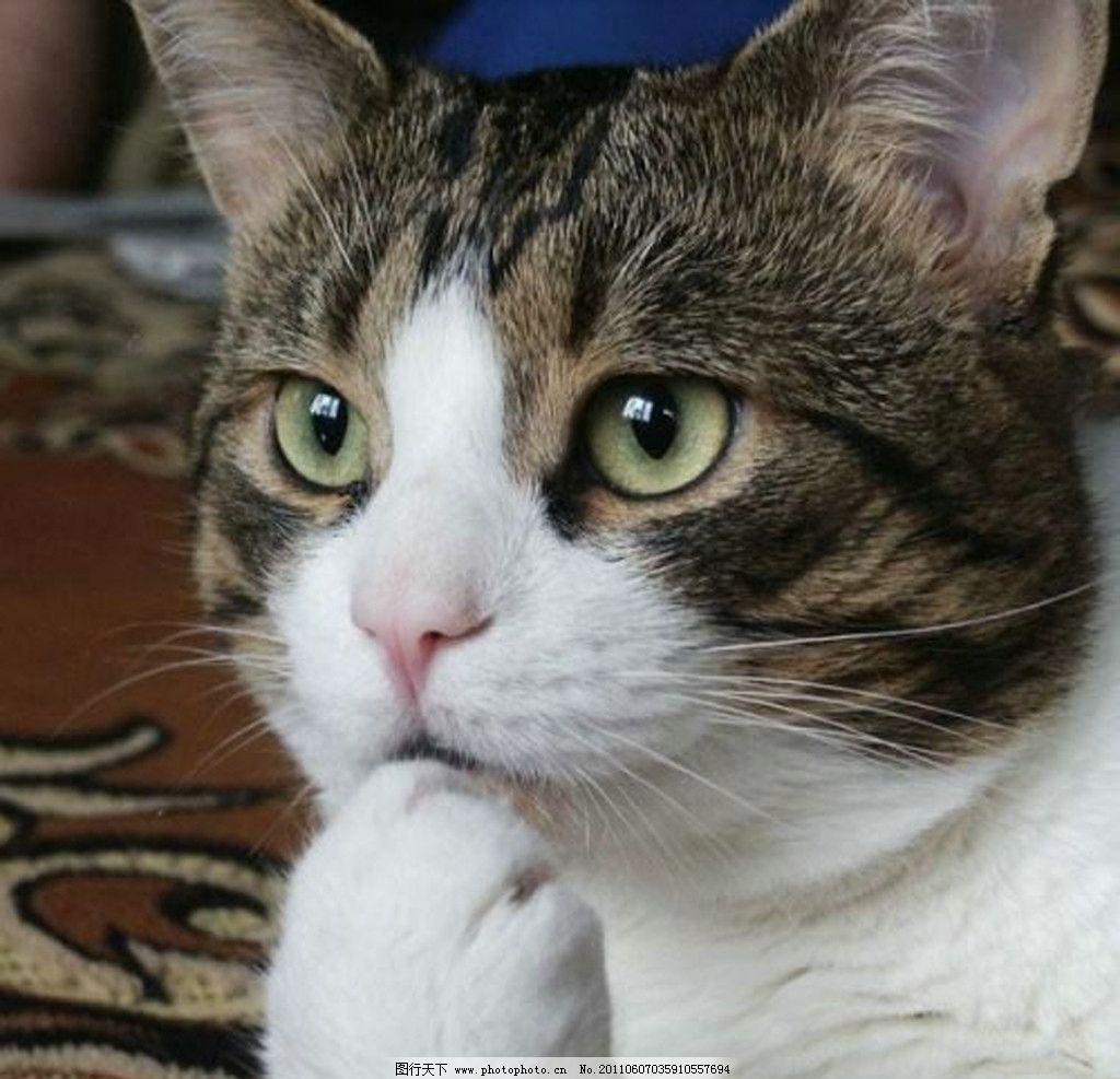 动物的眼睛怎么画
