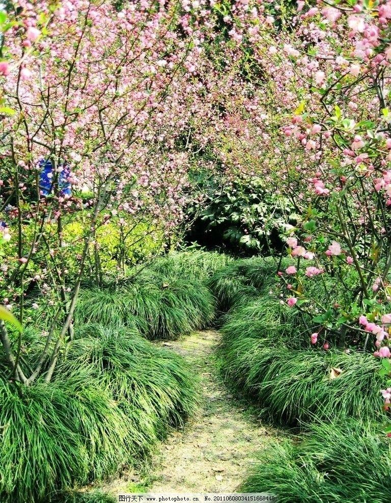 风景 海棠花 风光 小路 旅游摄影