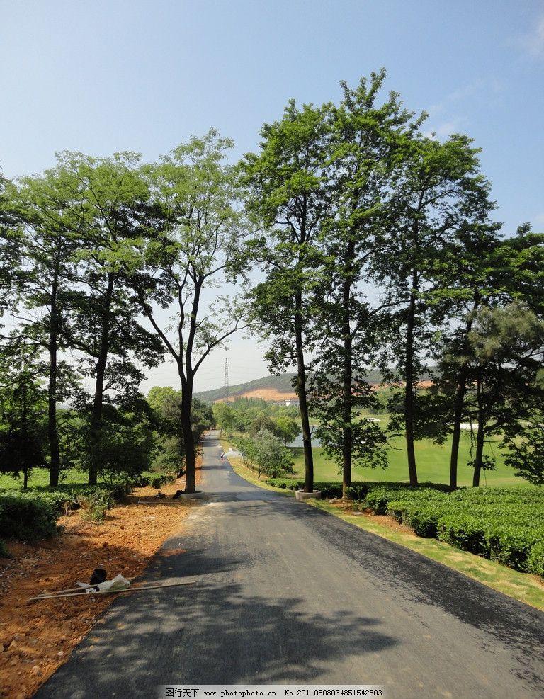 道路 下坡路 大树 无限延伸 自然风景 自然景观 摄影 72dpi jpg