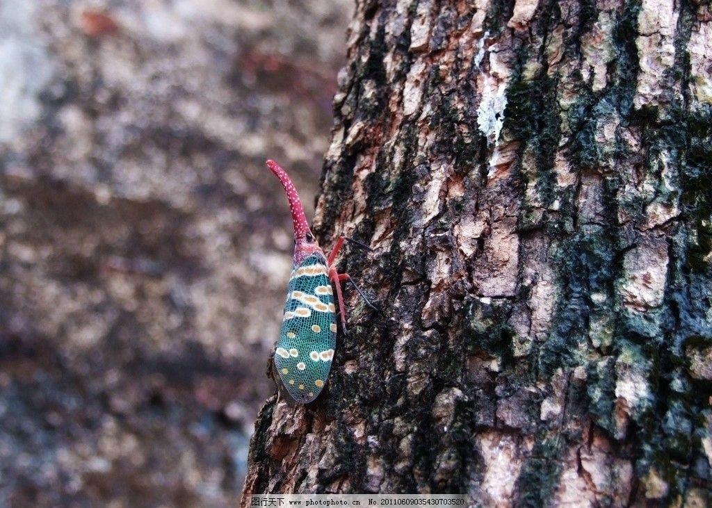 昆虫的触角结构示意图