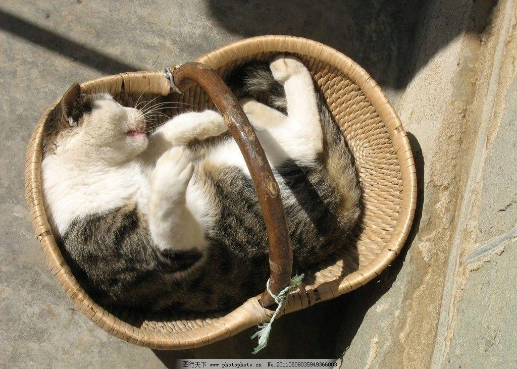猫咪 动物 可爱 篮子里的猫 媚态 摄影
