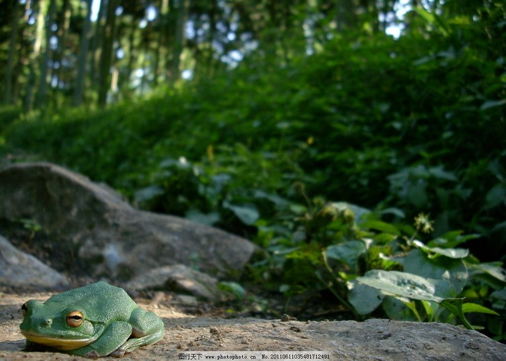 青蛙 田园风光 田野风光 风景 公园 树林 草地 摄影