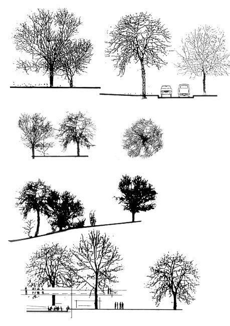 ps格式立面树配景免费下载 ps素材 环境设计 ps素材 环境园林立面树配