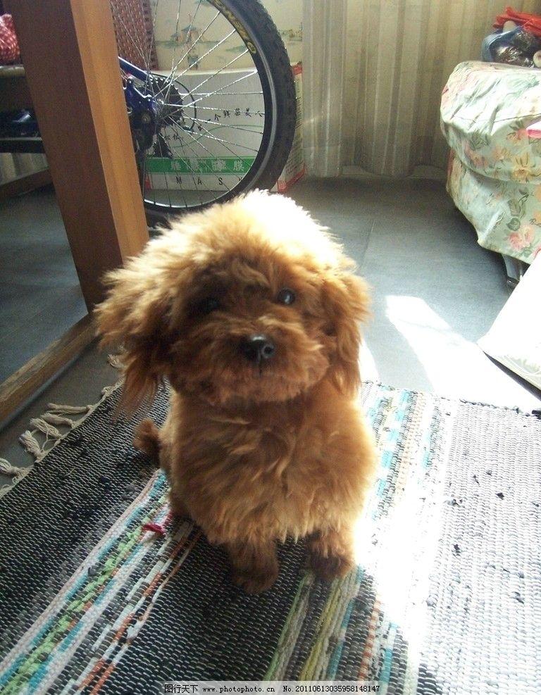 可爱泰迪犬