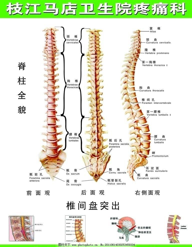 脊柱全貌图 脊柱 全貌 疼痛科 椎间盘突出 症状图 展板模板 广告设计