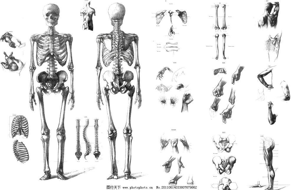 人体绘画 绘画 绘画资料 人体骨骼 人体肌肉解剖 其他 源文件 pdf