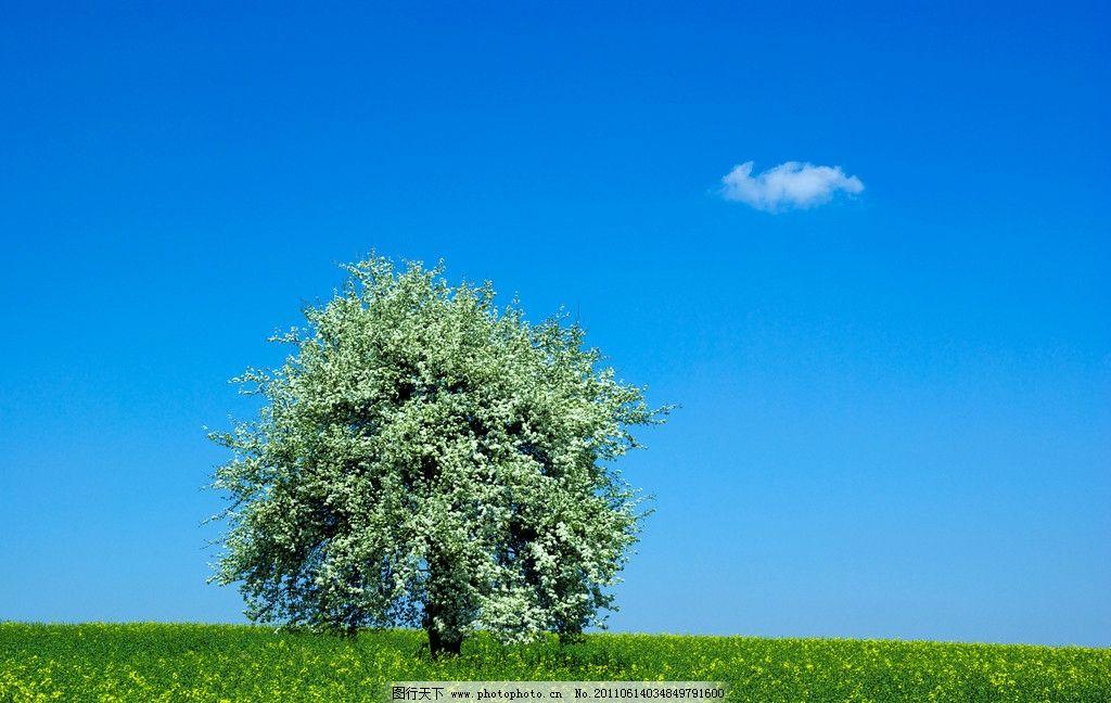 蓝天白云绿野草地大树图片