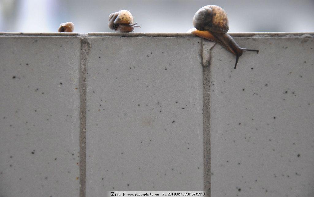 蜗牛 爬墙 野生动物 生物世界 摄影 72dpi jpg