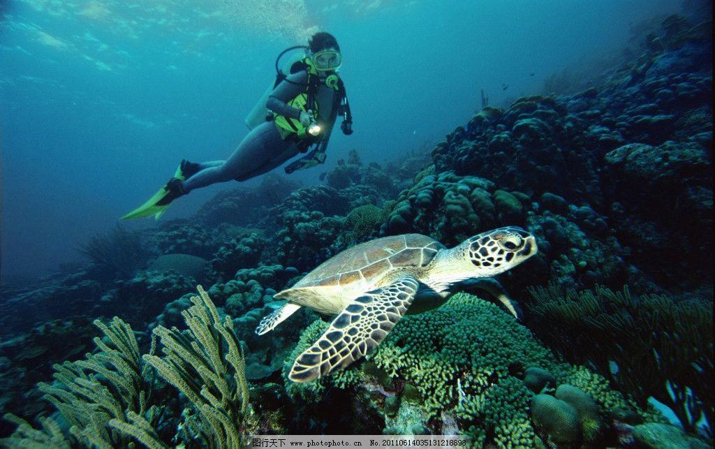 海龟 海洋生物 海底世界 海洋 珊蝴 潜水员 礁石 生物世界 摄影 300