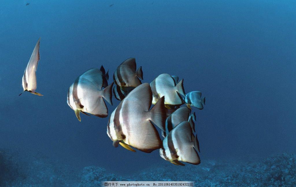 海洋鱼类 海洋生物 海底世界