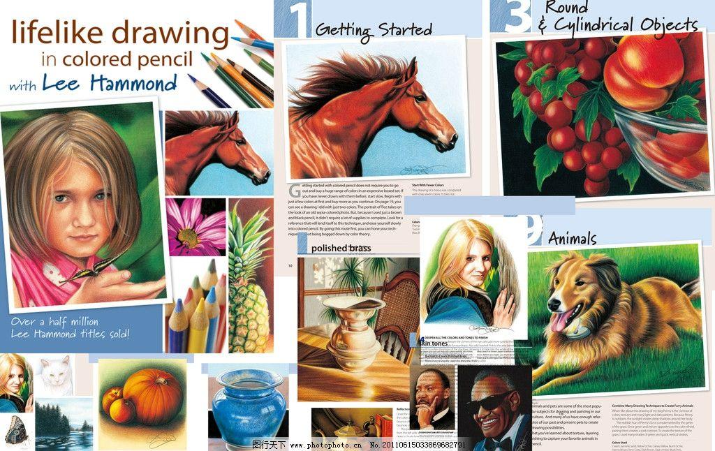 栩栩如生的彩铅画 绘画 绘画资料 动物 马狗 人头像 静物 画法