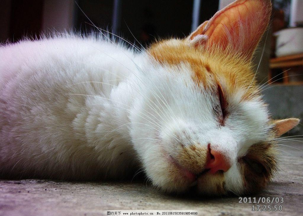 小花猫 猫咪 小猫 睡觉 睡着 摄影
