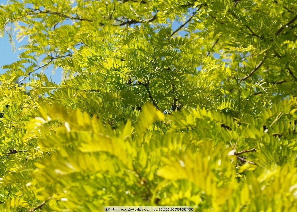 绿叶 树叶 树木 树枝 子叶 绿树成荫 枝干 树干 绿色 树林 树木树叶