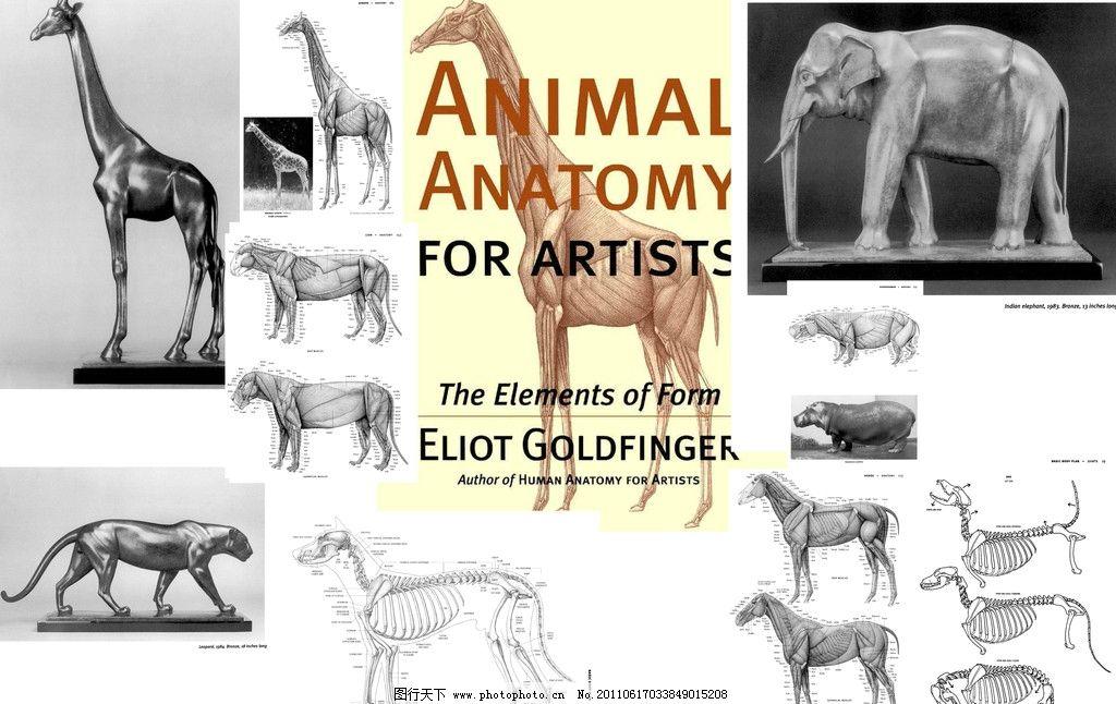动物画法 狗 豹子 大象