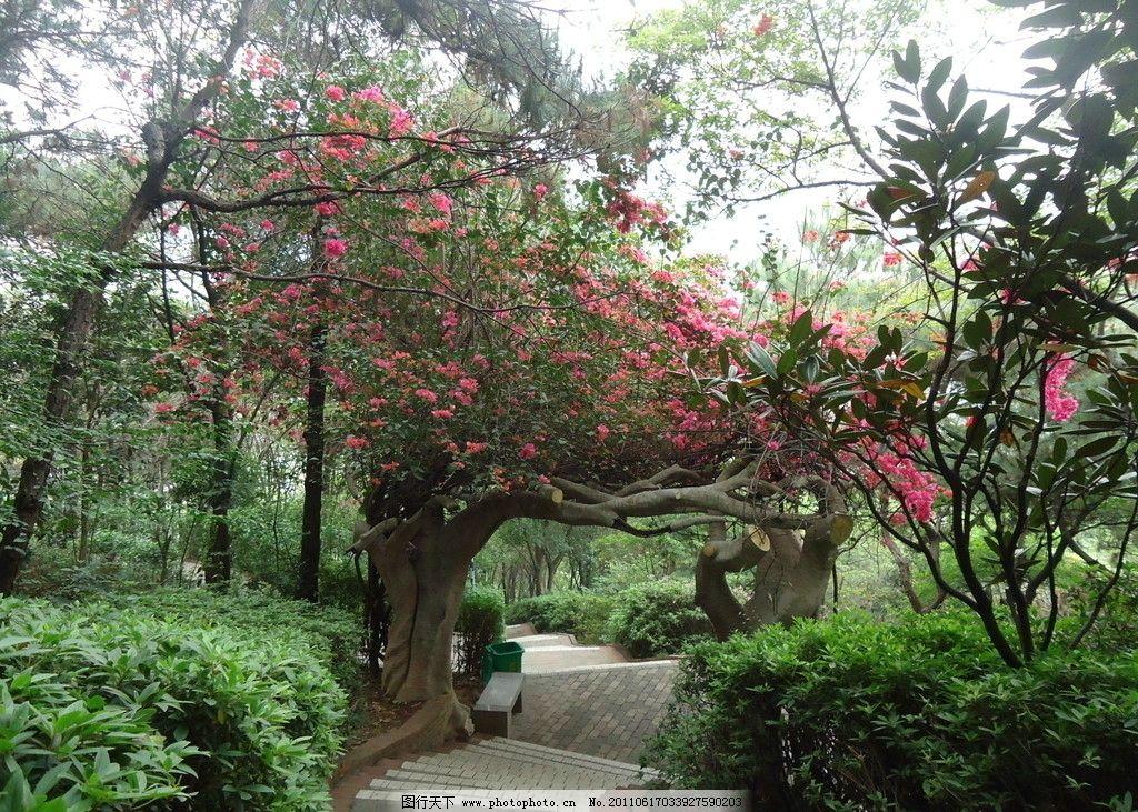 公园风景 红花 景色 树木 公园 风景 旅游 风光 石凳 夏天 自然风景