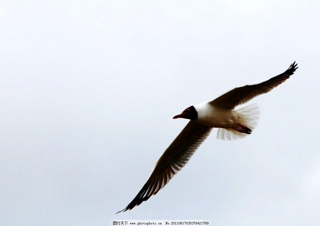 壁纸 动物 鸟 鸟类 桌面 1024_725