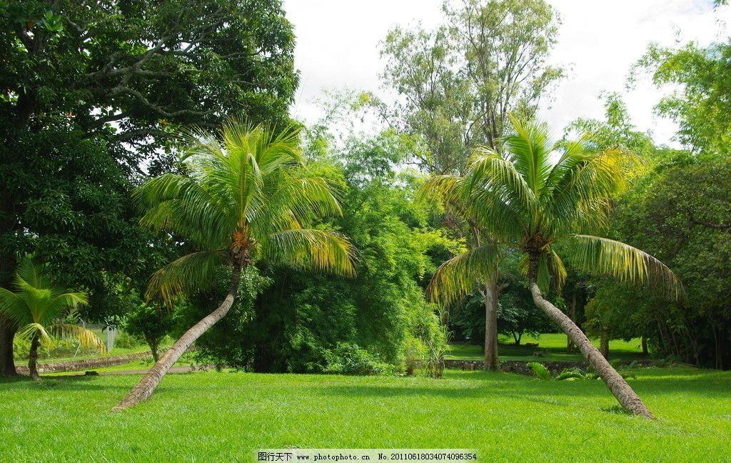 向前延伸的椰子树图片