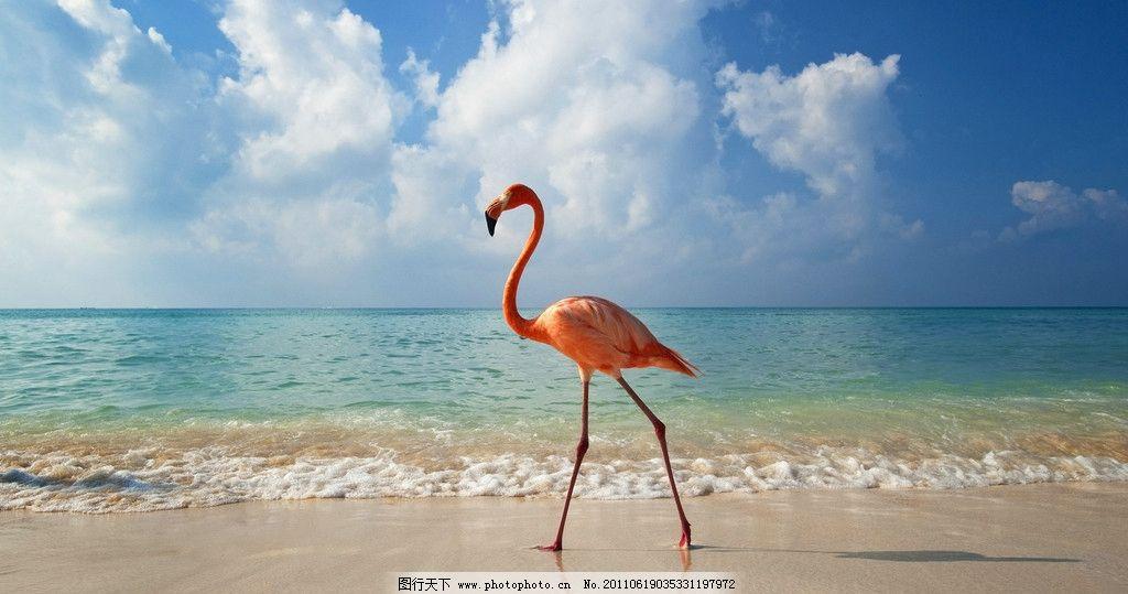 特殊海滩动物图片大全