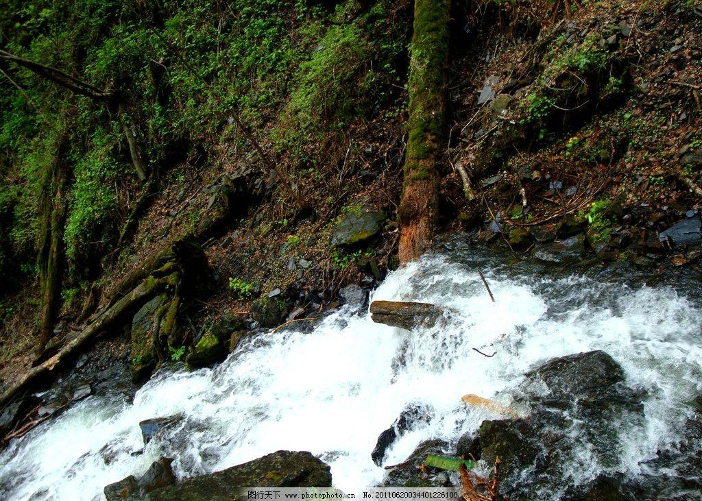 五常凤凰山 大峡谷 枯木青苔图片_山水风景_自然景观