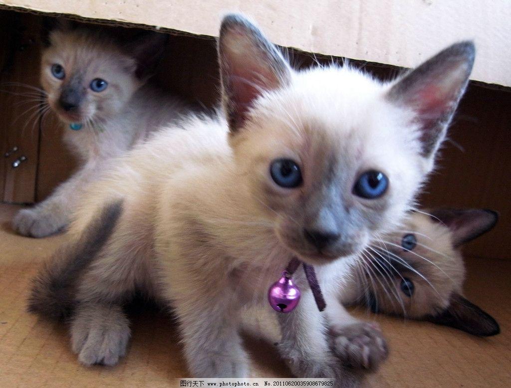 壁纸 动物 猫 猫咪 小猫 桌面 1024_778