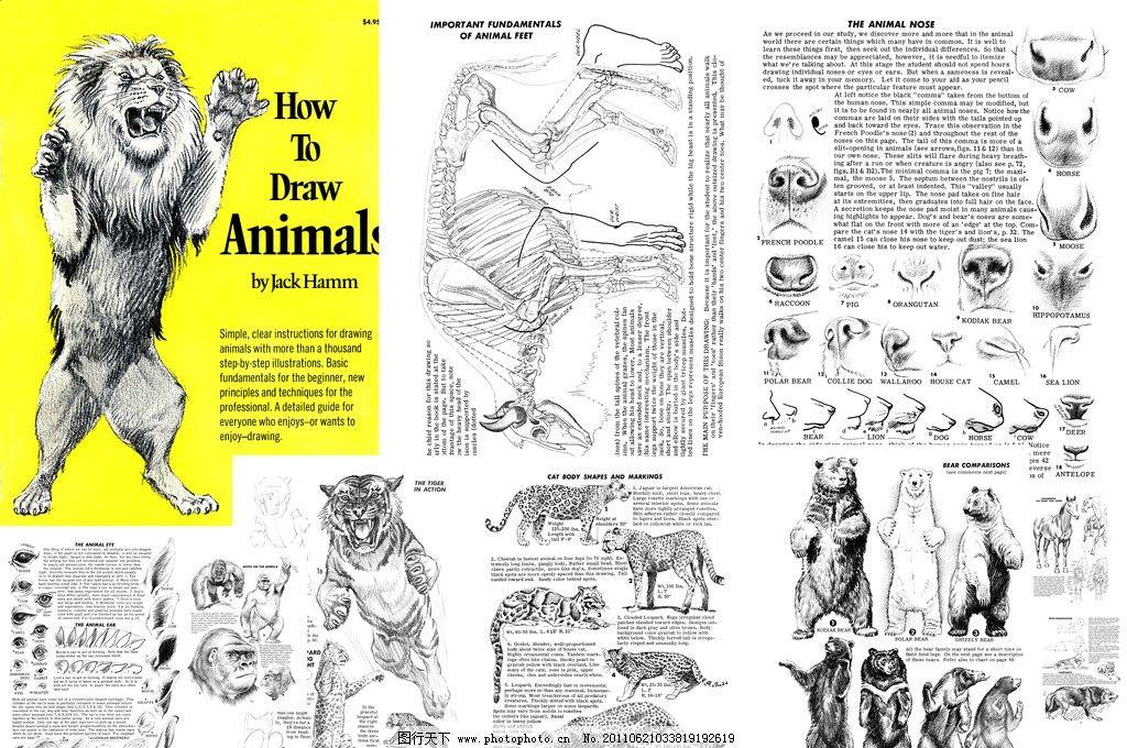 如何画动物 动物 各种动物 狮子 老虎 狼 熊 马的画法 动物素描 绘画