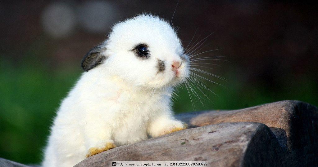 小兔 可爱动物 野生动物 兔子 岩石 小东西 乖巧 摄影