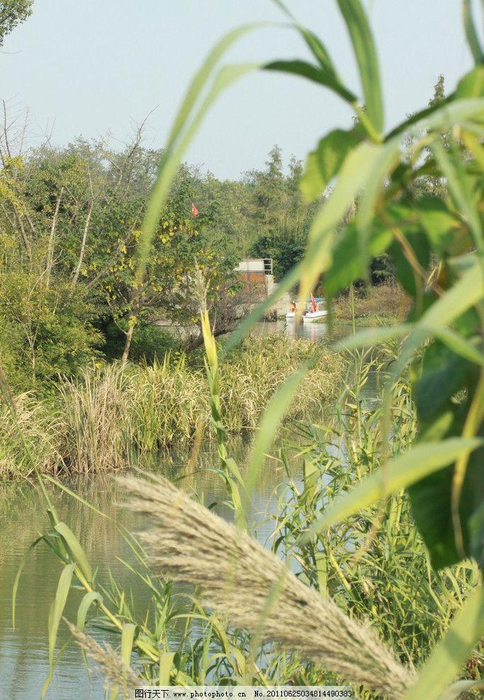 景色 西溪/西溪湿地景色湖面 植物图片