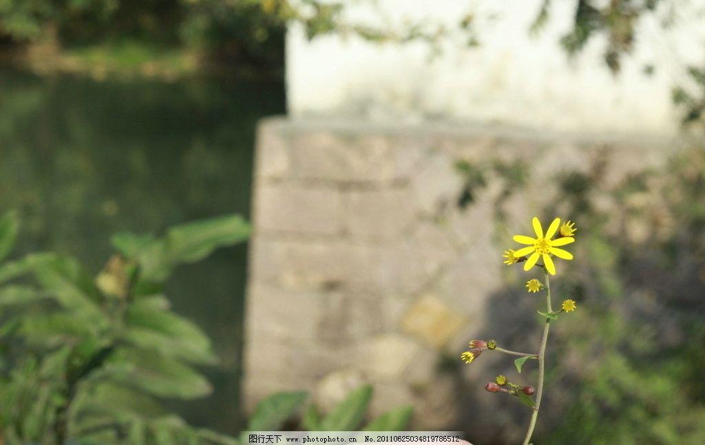 景色 西溪/西溪湿地景色 植物图片