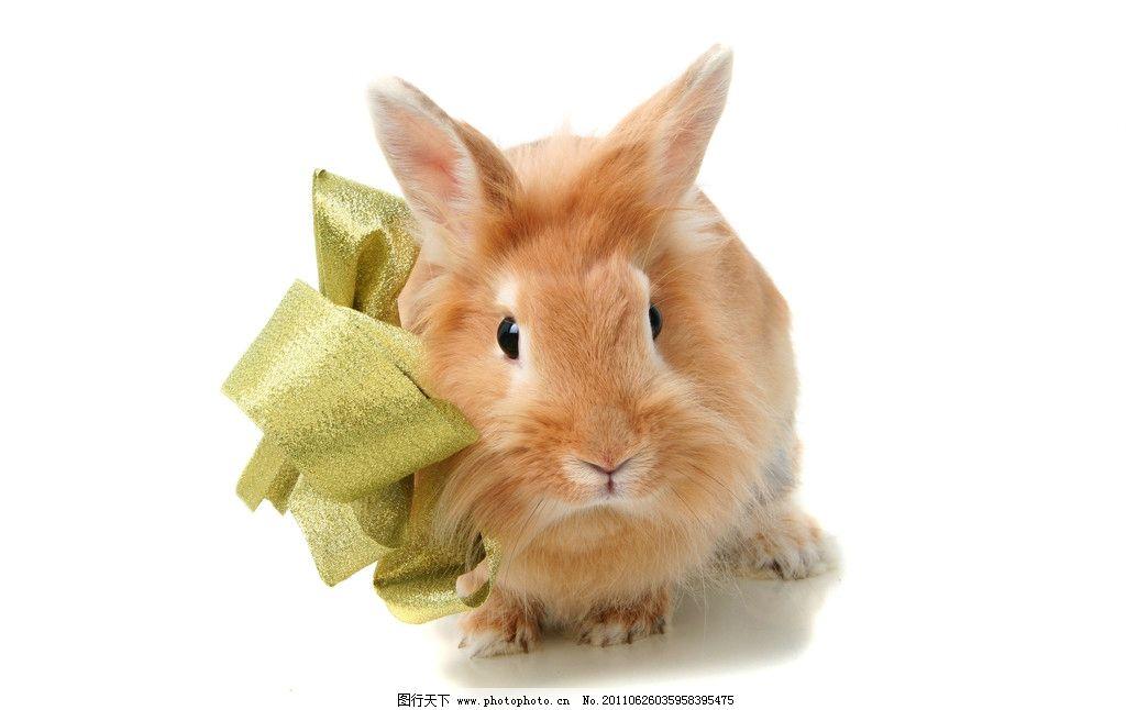 兔子高清图片 可爱 宠物