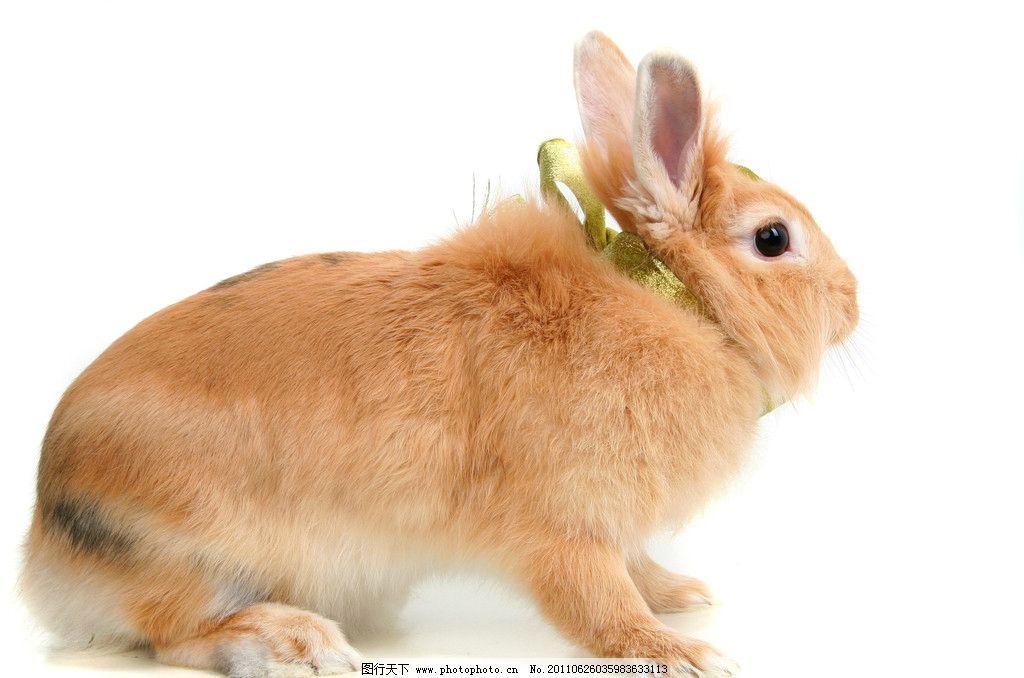 不开心的兔子图片可爱